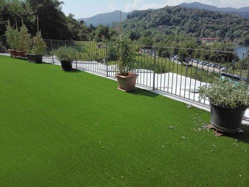 posed grass